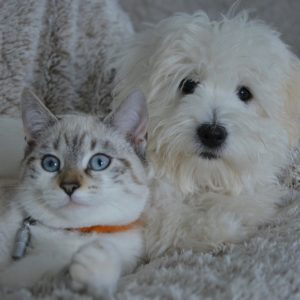 White dog and cat sitting on a plush blanket